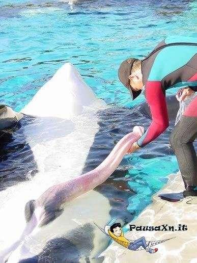 Il Pene più Lungo del Mondo balena pene