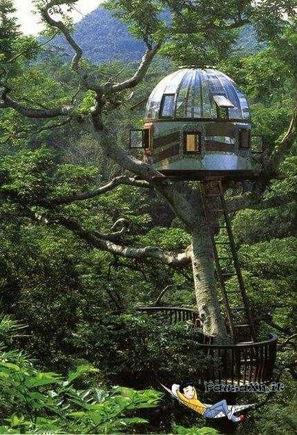 Bella Casa sull Albero casa albero